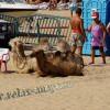Курортный район Витязево пляж